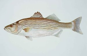 Read more about the article How to Choose Your Live Bait for Saltwater Fishing